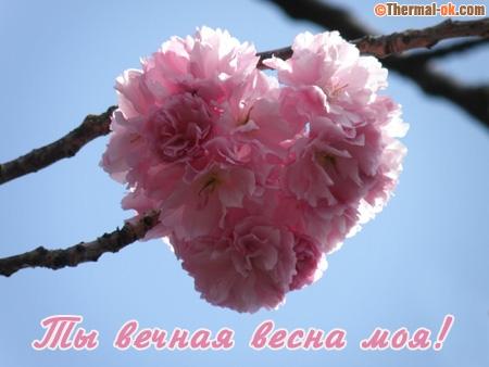 Ты вечная весна моя